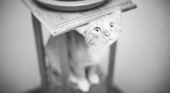 Decorative Cat - black and white wallpaper designs